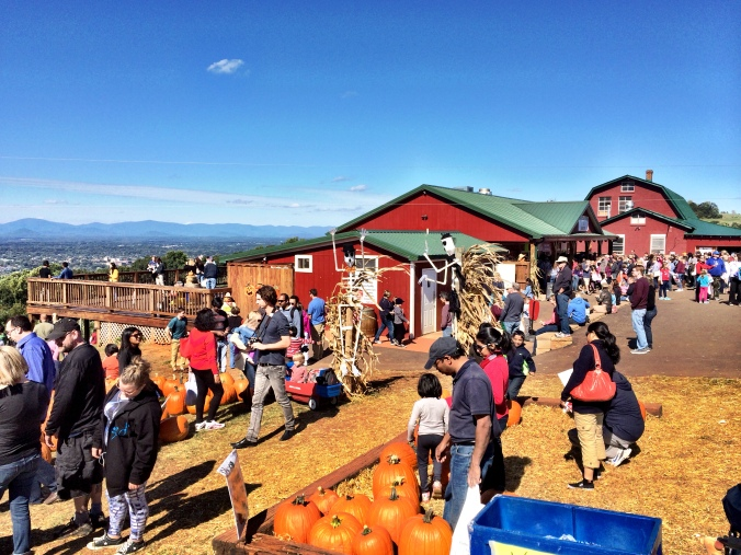 Apple Picking at Carter Mountain Orchard with the MAD crew